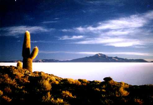 Cactus on the Island in teh middle of the Salar de Uyuni